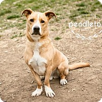 Adopt A Pet :: Pendleton - Kansas City, MO