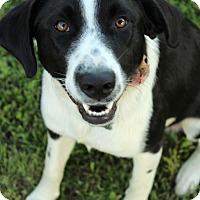 Adopt A Pet :: Sofie - McCormick, SC