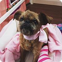 Adopt A Pet :: Emmy - Staten Island, NY