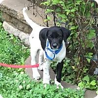 Adopt A Pet :: Luke - Omaha, NE