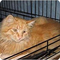 Adopt A Pet :: Milo - Westfield, MA