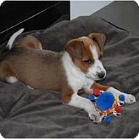 Adopt A Pet :: Jools - Pending - Vancouver, BC