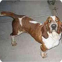 Adopt A Pet :: Hickory - Phoenix, AZ