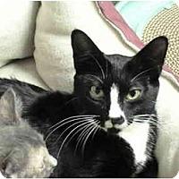 Adopt A Pet :: Momma T - Naples, FL