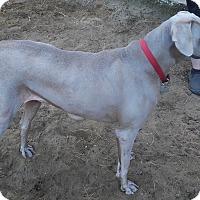 Adopt A Pet :: Hansel - Grand Haven, MI