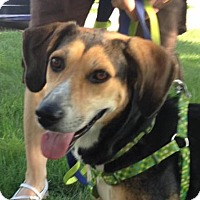 Adopt A Pet :: Bella - North Olmsted, OH