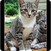 Adopt A Pet :: Jambi - Waldorf, MD