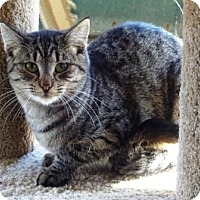 Adopt A Pet :: Megara - Lathrop, CA
