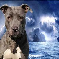 Adopt A Pet :: DIAMOND - Fairfield, CA