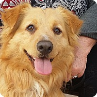 Adopt A Pet :: Cecil - Santa Barbara, CA