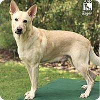 Adopt A Pet :: RUGER - Tomball, TX