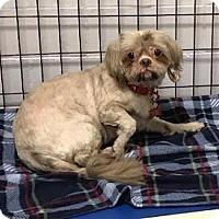 Adopt A Pet :: Chewie - Valparaiso, IN