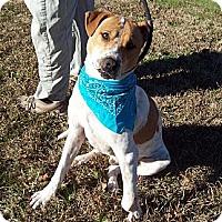 Adopt A Pet :: DAKOTA /Survival Story - Glastonbury, CT