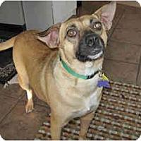 Adopt A Pet :: Lilly - Scottsdale, AZ