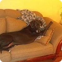 Adopt A Pet :: Karma - Inver Grove Heights, MN