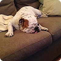 Adopt A Pet :: Willow - Cibolo, TX