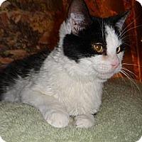 Adopt A Pet :: Bruno - Norwich, NY