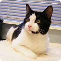 Adopt A Pet :: Snickers - Modesto, CA