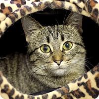 Adopt A Pet :: Chia - Chicago, IL
