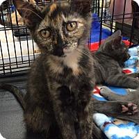 Adopt A Pet :: Torrie, Tommie - Harrisburg, NC