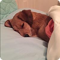 Adopt A Pet :: Rue-ADOPTION PENDING - Sacramento, CA