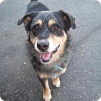 Adopt A Pet :: Jerico - Tracy, CA