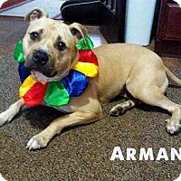 Adopt A Pet :: Armani - Cary, IL