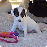 Adopt A Pet :: Cha Cha - Groton, MA