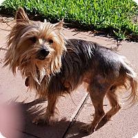 Adopt A Pet :: Griffin - Palm Coast, FL