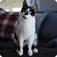 Adopt A Pet :: Akuna - Wayne, NJ