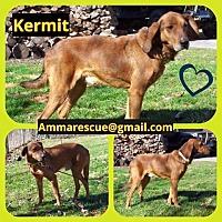 Adopt A Pet :: Kermit - Dunmore, WV