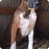 Adopt A Pet :: Carson - Russellville, KY