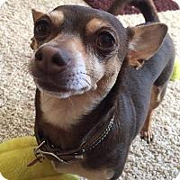 Adopt A Pet :: Kloe - Dallas, TX