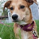 Adopt A Pet :: Missy 2 - ADOPTION PENDING - CONGRATS SAKOLSKYS!