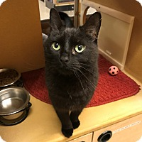 Adopt A Pet :: Salem - Barrington Hills, IL