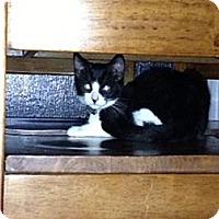 Adopt A Pet :: Shadow - Monrovia, CA