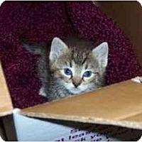 Adopt A Pet :: Tulip - Secaucus, NJ