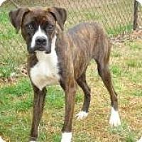Adopt A Pet :: DANDI - ROCKMART, GA