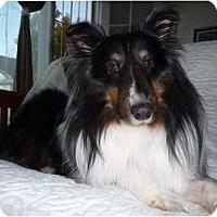 Adopt A Pet :: Kobi - San Diego, CA
