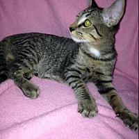 Adopt A Pet :: Gene - Sarasota, FL