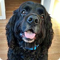 Adopt A Pet :: Milo - Brant, ON