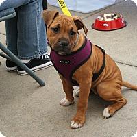 Adopt A Pet :: Bonnie - Arden, NC