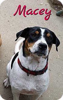 Hound (Unknown Type) Mix Dog for adoption in Cheney, Kansas - Macey