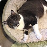 Adopt A Pet :: Blossom - Sewaren, NJ