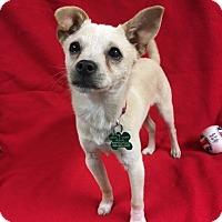 Adopt A Pet :: Rabbit - La Verne, CA