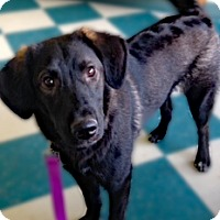 Adopt A Pet :: Lucy - Clifton Forge, VA