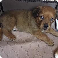 Adopt A Pet :: Lando - Alpharetta, GA