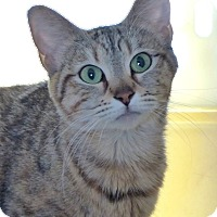 Adopt A Pet :: Minxy - Monterey, VA