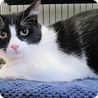 Adopt A Pet :: Swanky - Reeds Spring, MO