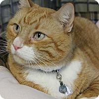 Adopt A Pet :: Monty - New Richmond,, WI